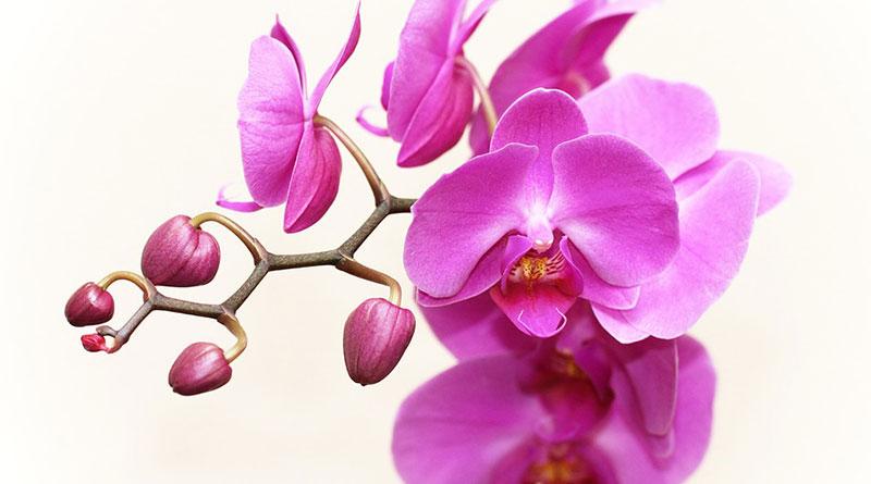 видове орхидеи